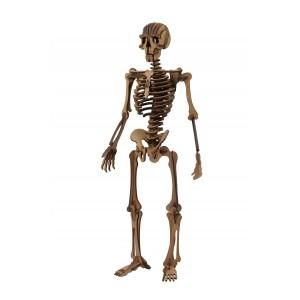 Wood Models Esqueleto Humano